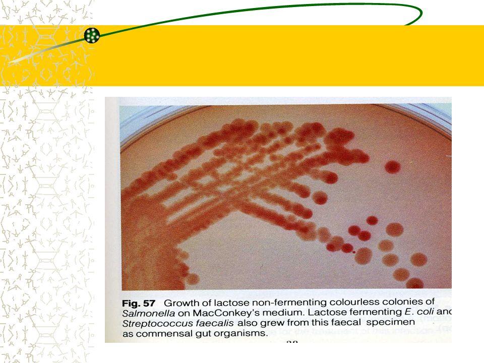 Caractères bactériologiques Caractères antigéniques Servent à déterminer la formule antigénique sérovar AgO : facteurs numérotés de 1 à 67 certains facteurs spécifiques de groupes facteur 2 pour le groupe A facteur 4 pour le groupe B facteur 9 pour le groupe D Ag Vi : Ag denveloppe qui peut masquer Ag O nest présent que chez S.typhi, S.paratyphi C et S.dublin Ag Vi est détruit par chauffage à 100°C