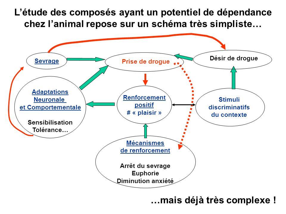 Utilité / utilisation du conditionnement (Pavlov et Skinner) dans les études comportementales chez lAnimal DIU de tabacologie 2008- Caroline Louis