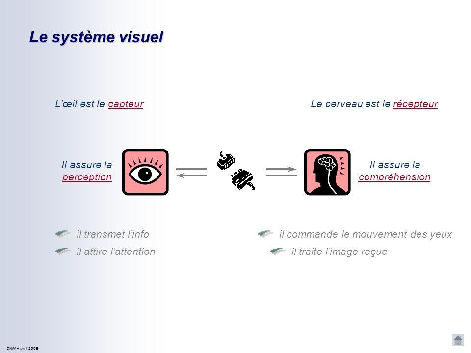 CNVV CNVV – avril 2006 Le système visuel Lœil est le capteurLe cerveau est le récepteur il commande le mouvement des yeux il transmet linfo Il assure la perception il traite limage reçue il attire lattention Il assure la compréhension