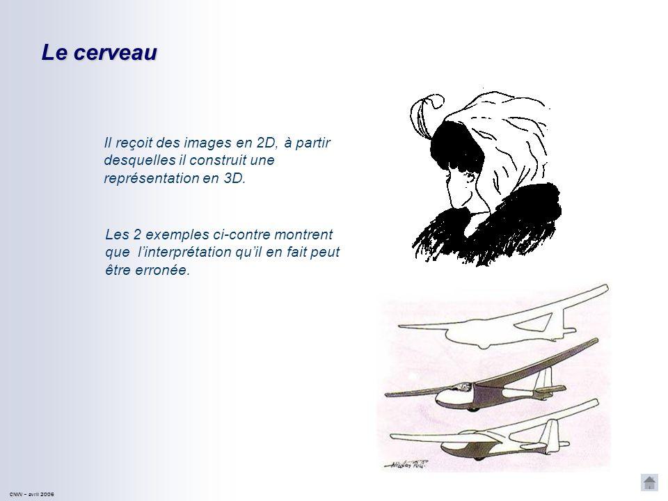 CNVV CNVV – avril 2006 Le cerveau Il reçoit des images en 2D, à partir desquelles il construit une représentation en 3D.