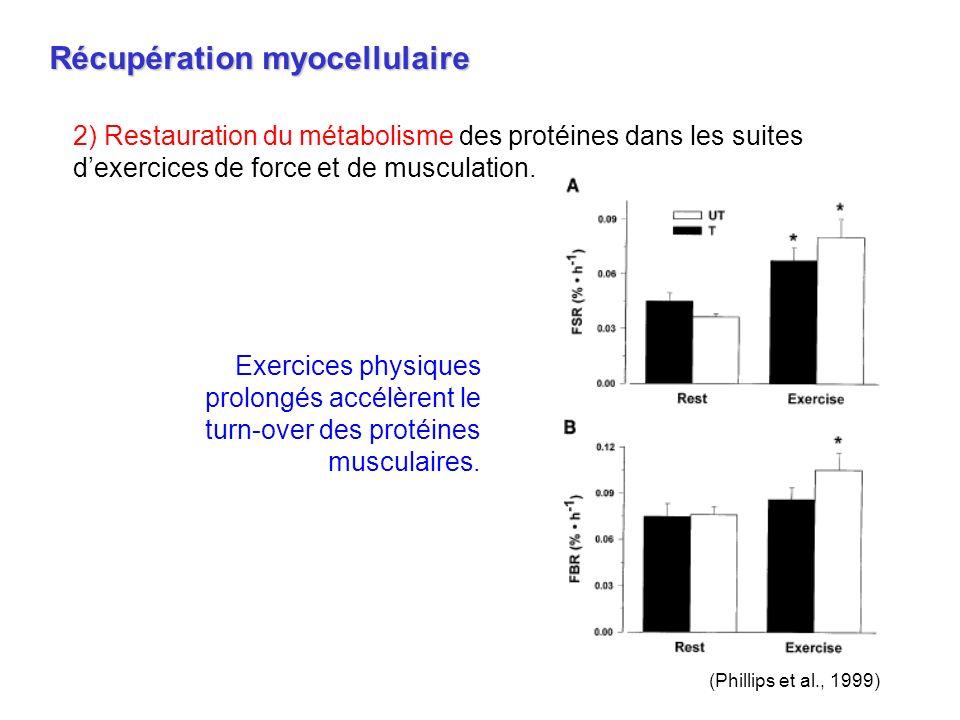 Récupération myocellulaire 2) Restauration du métabolisme des protéines dans les suites dexercices de force et de musculation. (Phillips et al., 1999)
