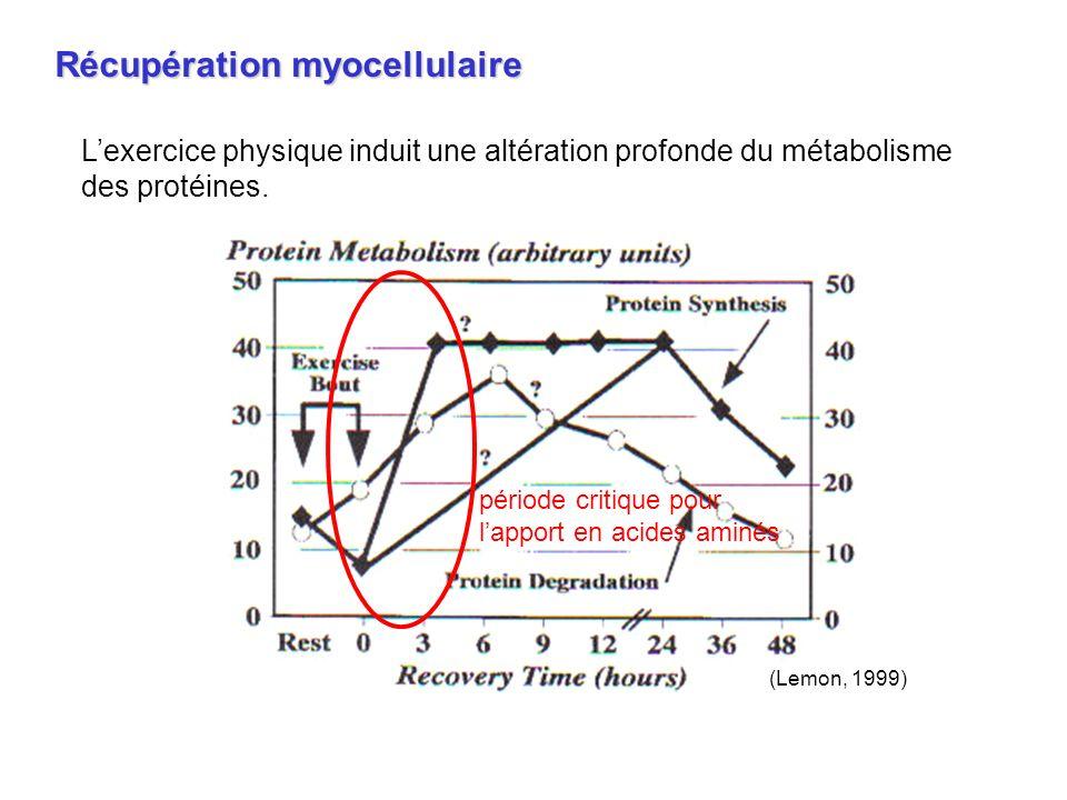 Lexercice physique induit une altération profonde du métabolisme des protéines. période critique pour lapport en acides aminés Récupération myocellula