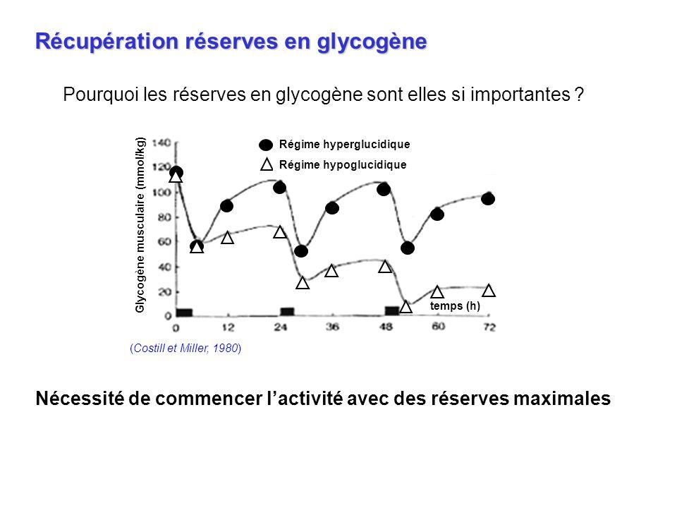 Pourquoi les réserves en glycogène sont elles si importantes ? Récupération réserves en glycogène Nécessité de commencer lactivité avec des réserves m