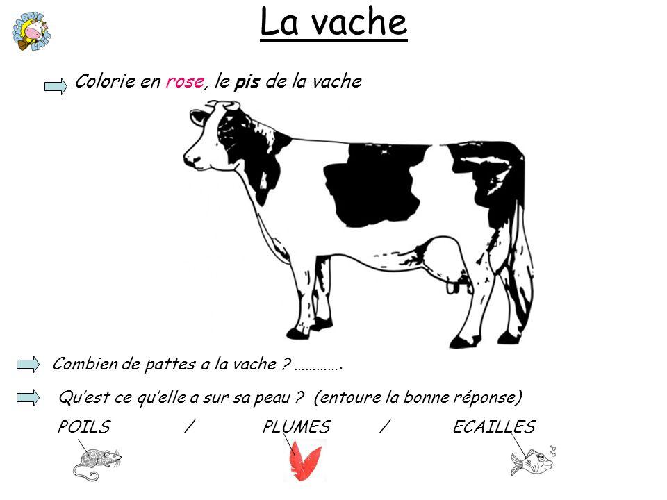 La vache Colorie en rose, le pis de la vache Combien de pattes a la vache ? …………. Quest ce quelle a sur sa peau ? (entoure la bonne réponse) POILS / P