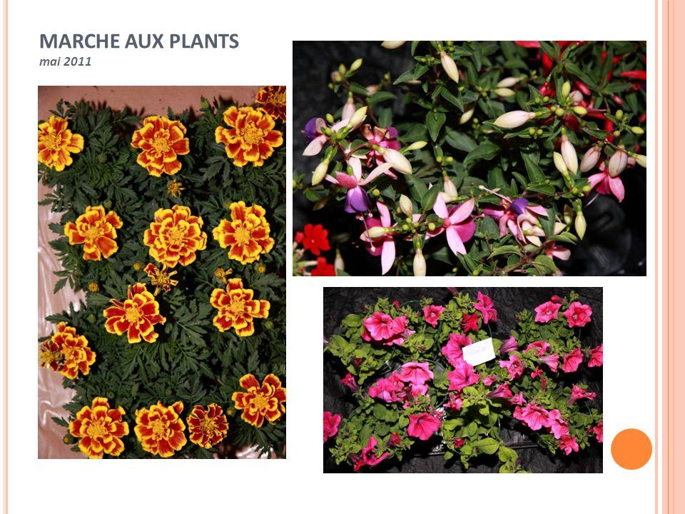 MARCHE AUX PLANTS mai 2011