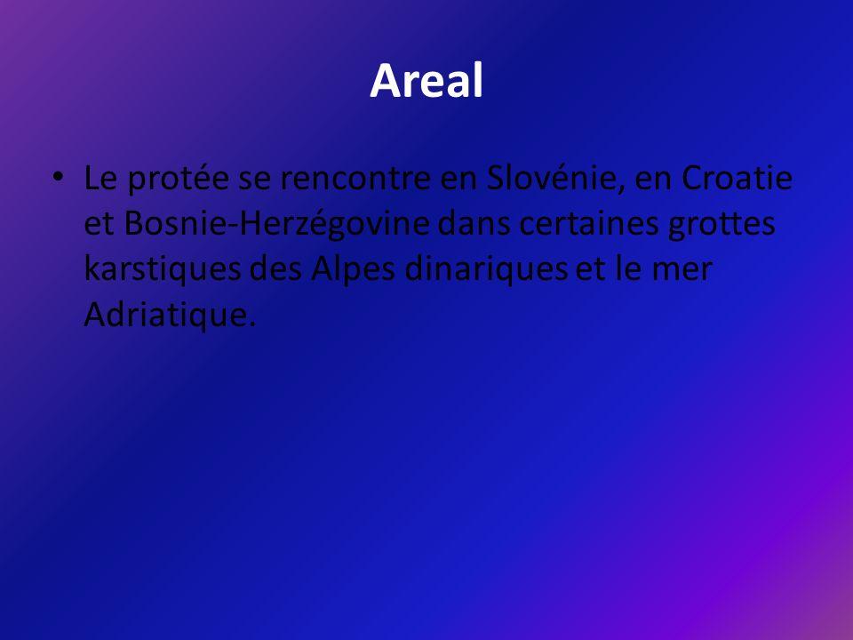 Areal Le protée se rencontre en Slovénie, en Croatie et Bosnie-Herzégovine dans certaines grottes karstiques des Alpes dinariques et le mer Adriatique.