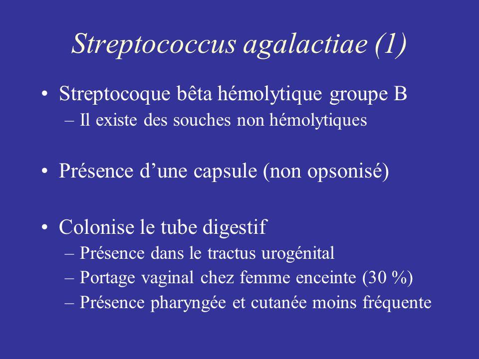 Streptococcus agalactiae (1) Streptocoque bêta hémolytique groupe B –Il existe des souches non hémolytiques Présence dune capsule (non opsonisé) Colon