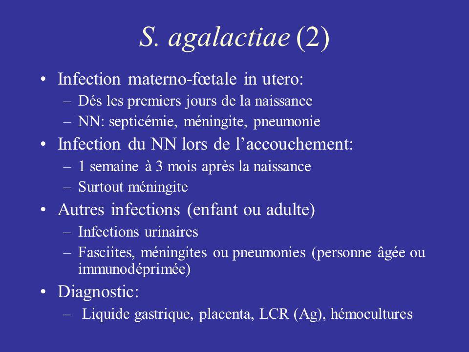 S. agalactiae (2) Infection materno-fœtale in utero: –Dés les premiers jours de la naissance –NN: septicémie, méningite, pneumonie Infection du NN lor