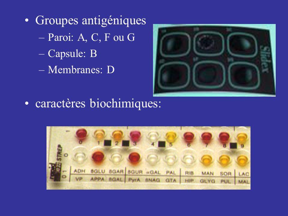 Groupes antigéniques –Paroi: A, C, F ou G –Capsule: B –Membranes: D caractères biochimiques: