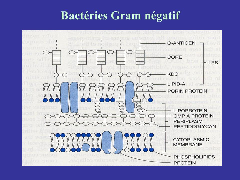 Bactéries Gram négatif
