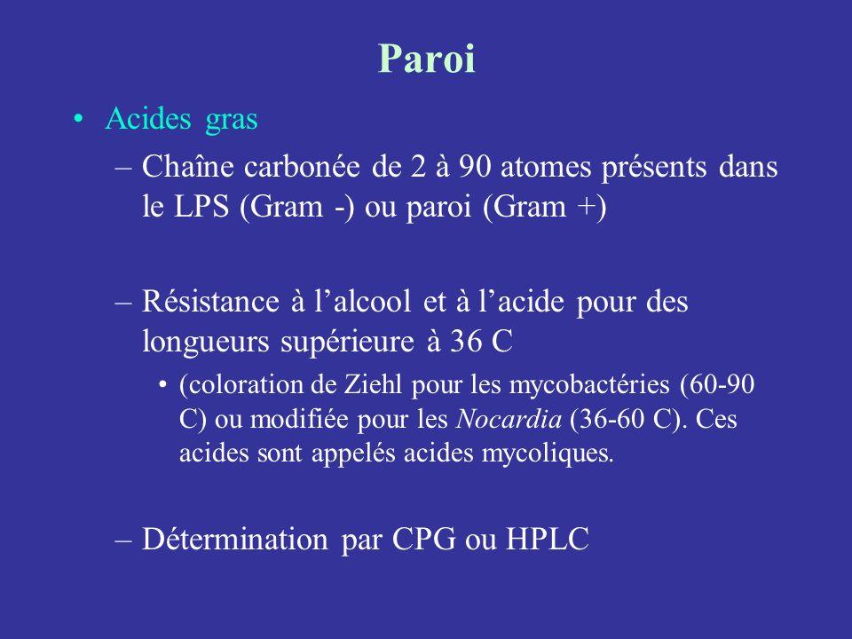 Paroi Acides gras –Chaîne carbonée de 2 à 90 atomes présents dans le LPS (Gram -) ou paroi (Gram +) –Résistance à lalcool et à lacide pour des longueu