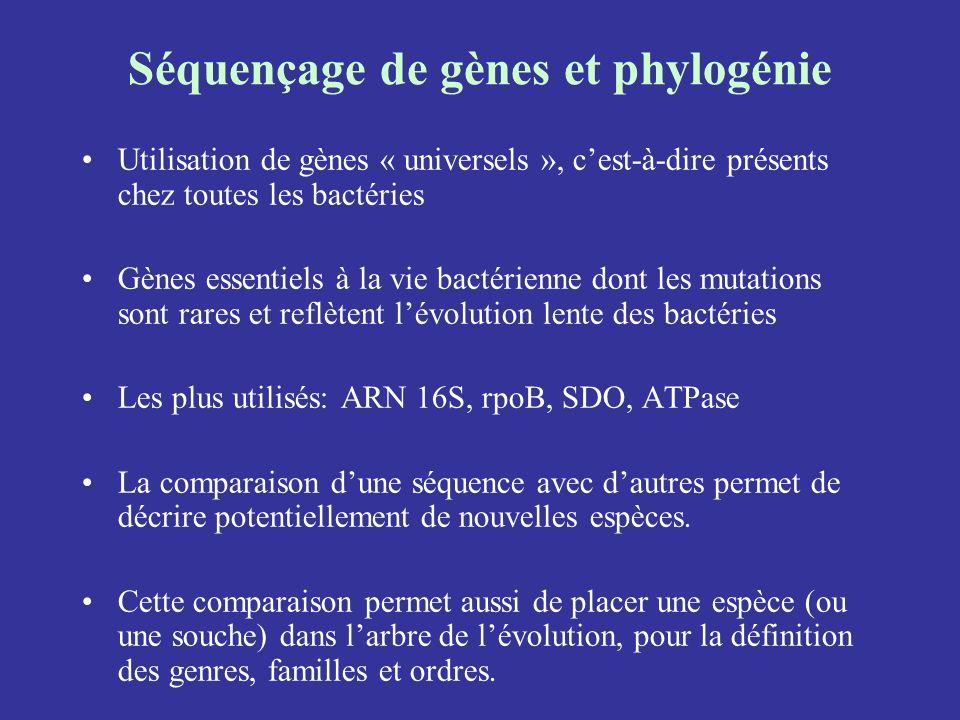 Séquençage de gènes et phylogénie Utilisation de gènes « universels », cest-à-dire présents chez toutes les bactéries Gènes essentiels à la vie bactér