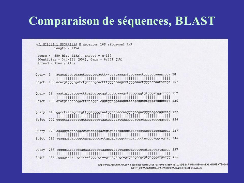 Comparaison de séquences, BLAST