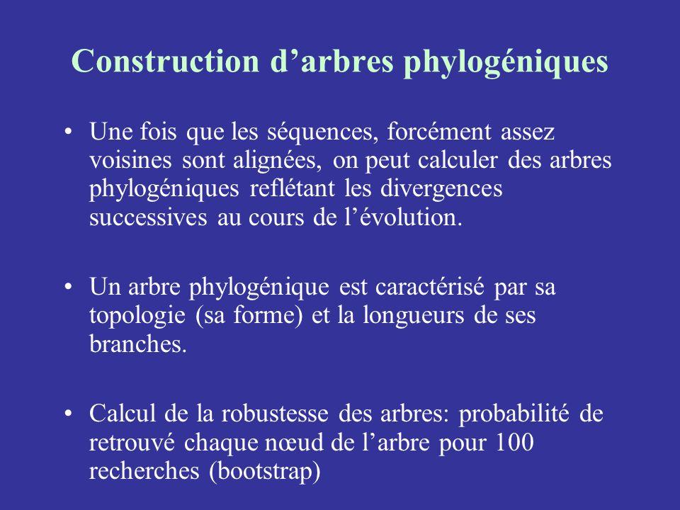Construction darbres phylogéniques Une fois que les séquences, forcément assez voisines sont alignées, on peut calculer des arbres phylogéniques reflé