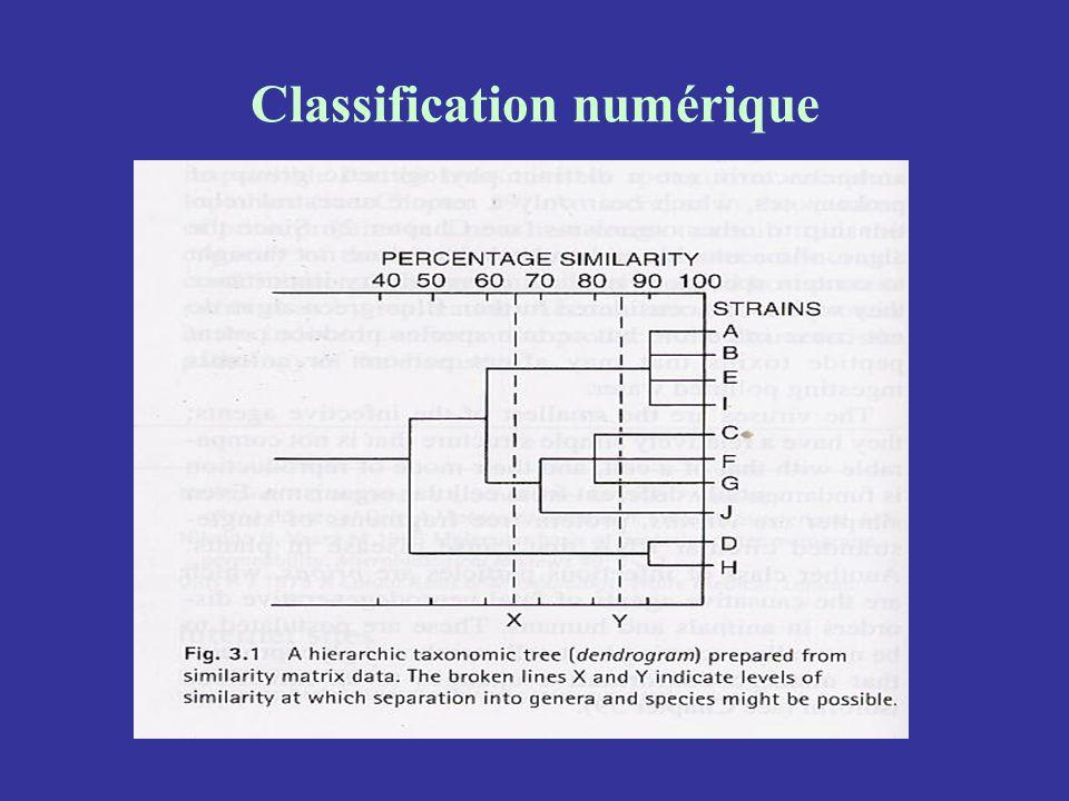 Classification phénotypique, chimiotaxonomie Étude de molécules qui résultent dune série de réactions enzymatiques et donc de lexpression de plusieurs gènes (contre un seul pour de nombreux tests simples).