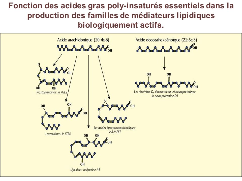 Fonction des acides gras poly-insaturés essentiels dans la production des familles de médiateurs lipidiques biologiquement actifs.
