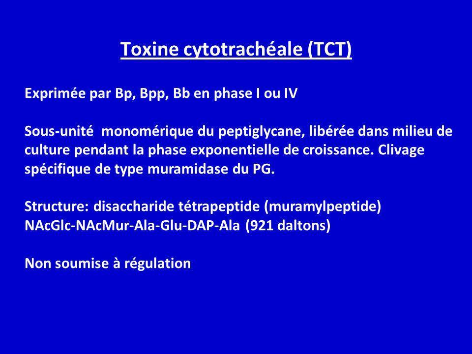 Toxine cytotrachéale (TCT) Exprimée par Bp, Bpp, Bb en phase I ou IV Sous-unité monomérique du peptiglycane, libérée dans milieu de culture pendant la