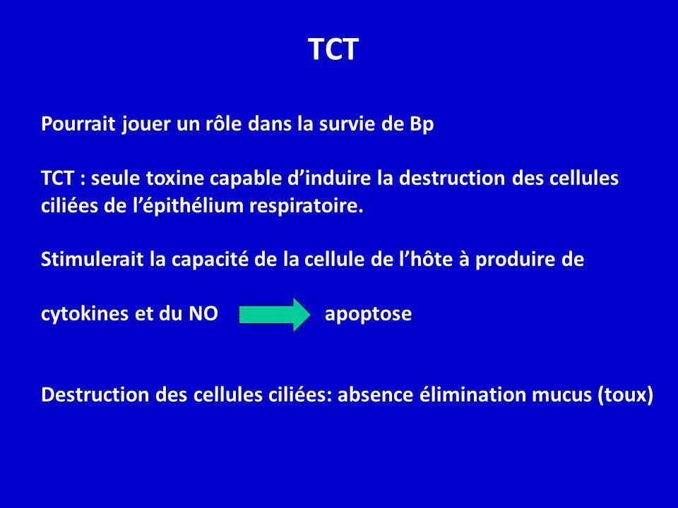 TCT Pourrait jouer un rôle dans la survie de Bp TCT : seule toxine capable dinduire la destruction des cellules ciliées de lépithélium respiratoire. S