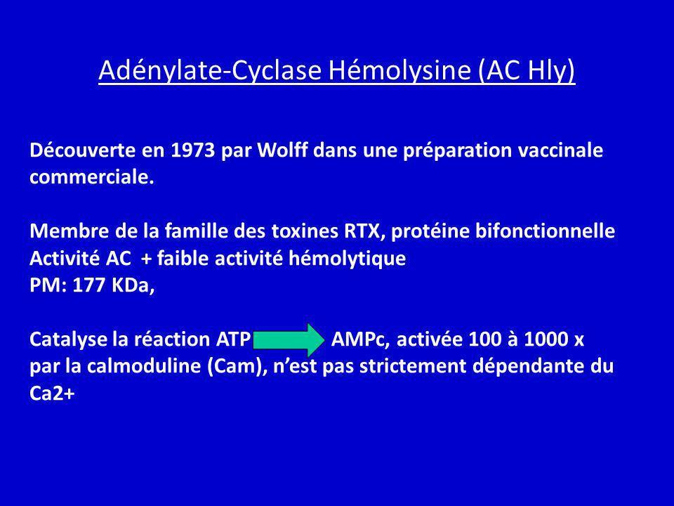 Adénylate-Cyclase Hémolysine (AC Hly) Découverte en 1973 par Wolff dans une préparation vaccinale commerciale. Membre de la famille des toxines RTX, p