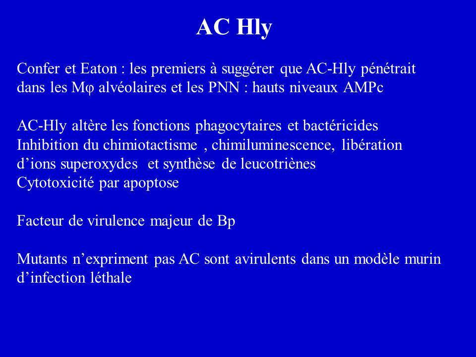 AC Hly Confer et Eaton : les premiers à suggérer que AC-Hly pénétrait dans les Mφ alvéolaires et les PNN : hauts niveaux AMPc AC-Hly altère les foncti