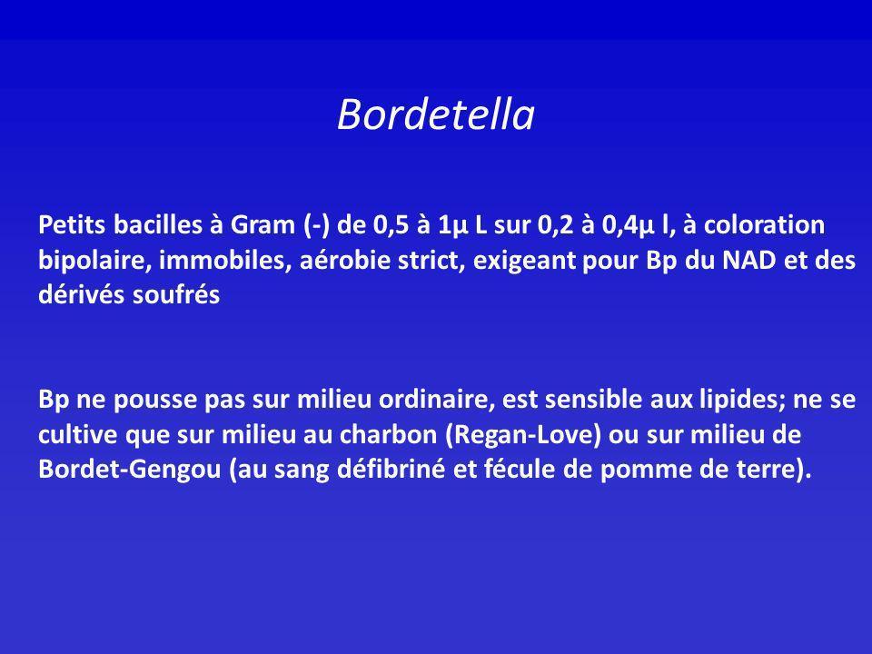 Bordetella Petits bacilles à Gram (-) de 0,5 à 1μ L sur 0,2 à 0,4μ l, à coloration bipolaire, immobiles, aérobie strict, exigeant pour Bp du NAD et de