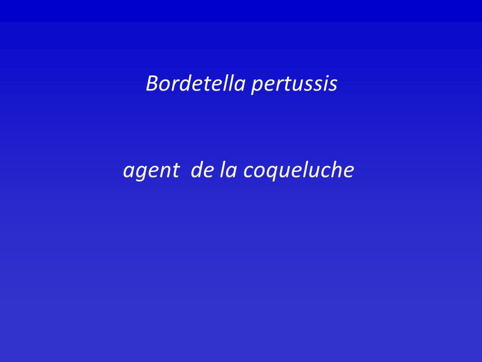 Bordetella pertussis agent de la coqueluche