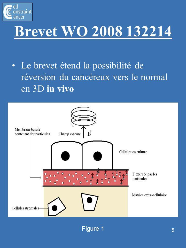 5 Brevet WO 2008 132214 Le brevet étend la possibilité de réversion du cancéreux vers le normal en 3D in vivo Figure 1
