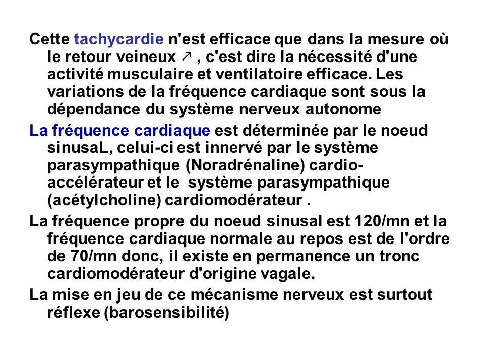 Cette tachycardie n'est efficace que dans la mesure où le retour veineux, c'est dire la nécessité d'une activité musculaire et ventilatoire efficace.