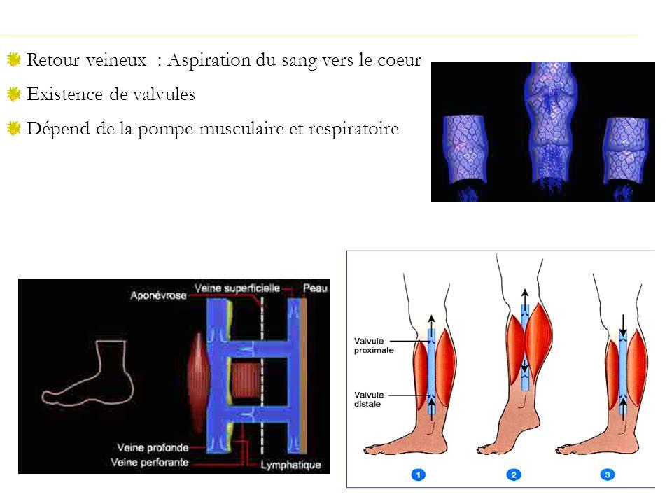 Retour veineux : Aspiration du sang vers le coeur Existence de valvules Dépend de la pompe musculaire et respiratoire