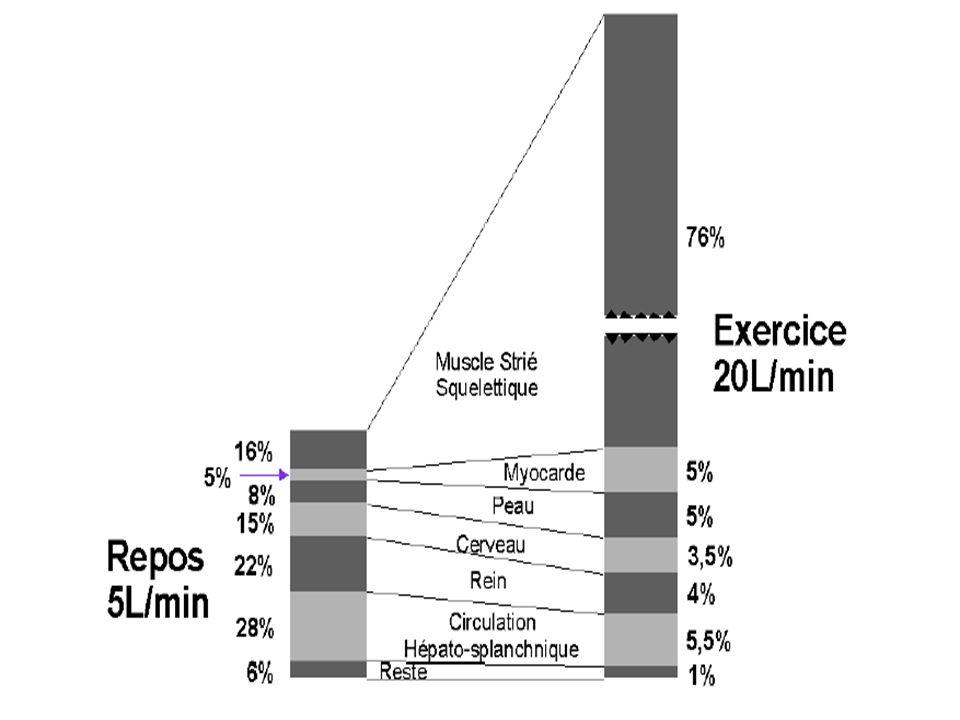 Physiologie cardiaque Débit cardiaque (Qc) = volume de sang expulsé par chaque ventricule par unité de temps Exprimé en litre par minute Qc = VES x Fc