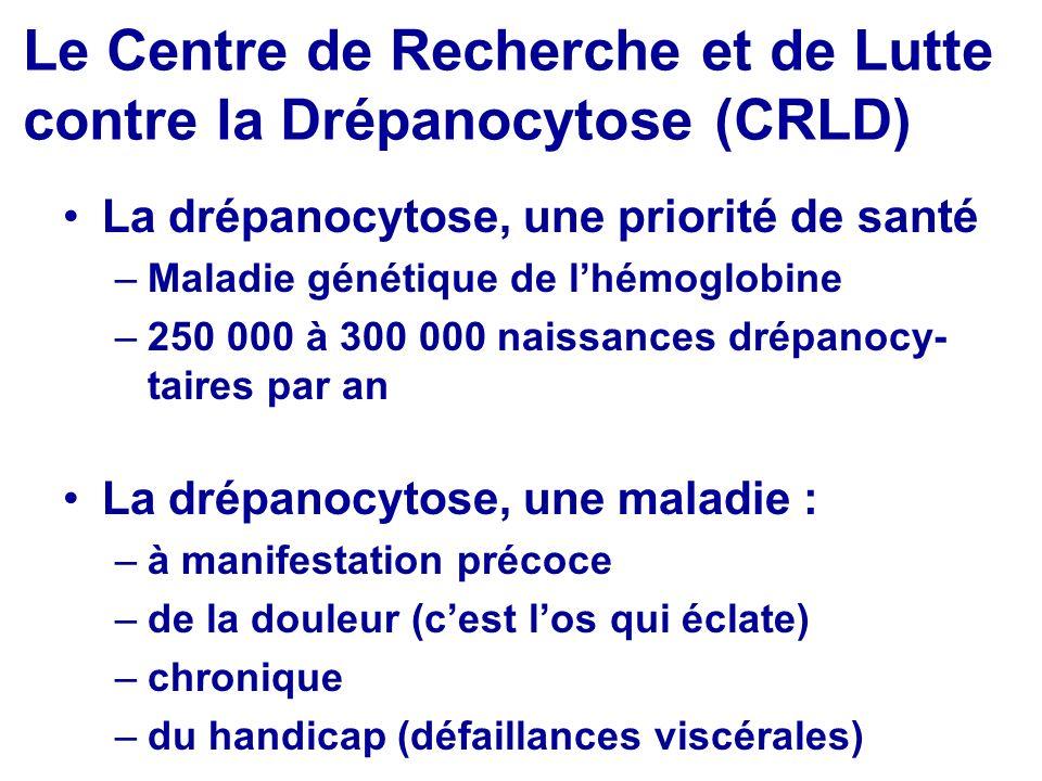 Le Centre de Recherche et de Lutte contre la Drépanocytose (CRLD) La drépanocytose, une priorité de santé –Maladie génétique de lhémoglobine –250 000