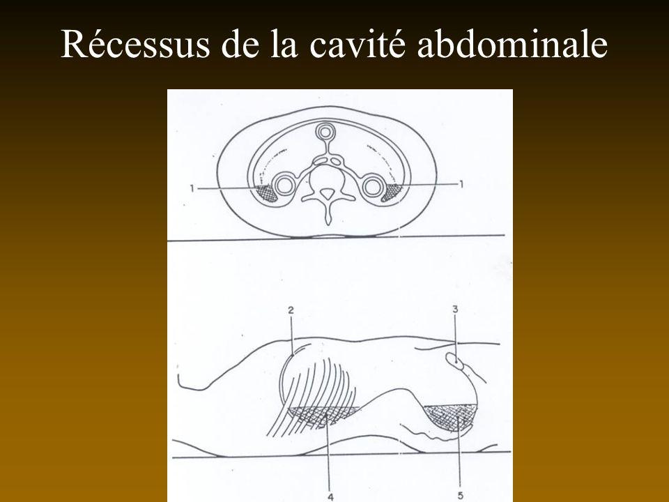 Récessus de la cavité abdominale