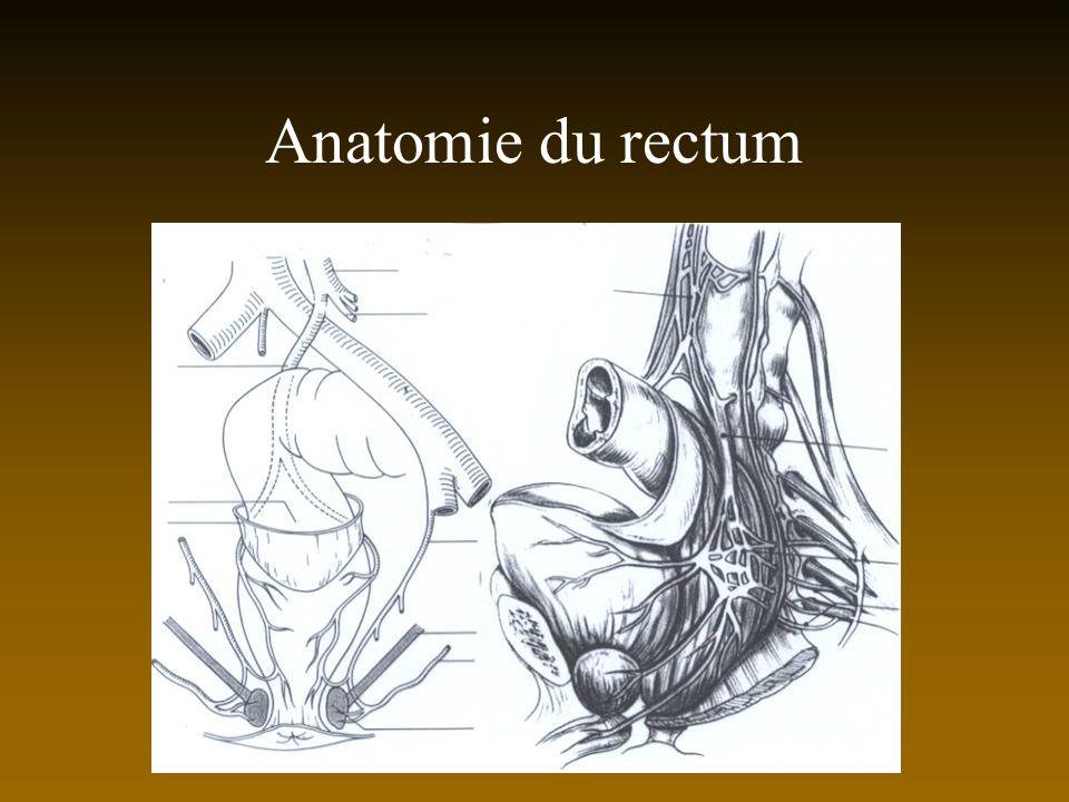 Anatomie du rectum