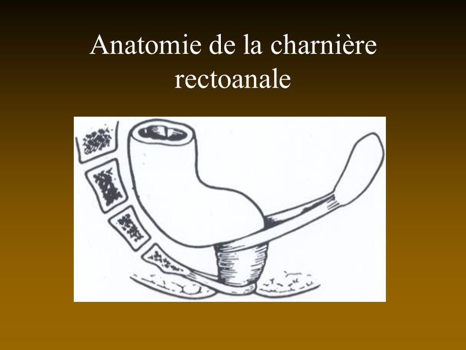 Anatomie de la charnière rectoanale