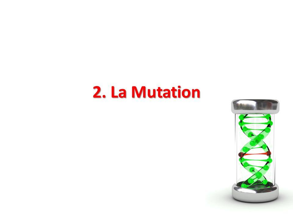 2. La Mutation