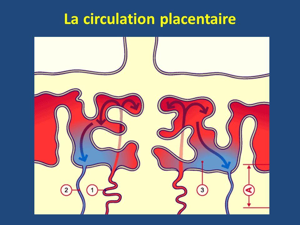 La circulation placentaire