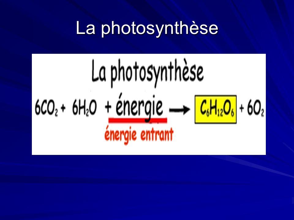 Écris léquation en mots 6 molécule de gaz ______________ + 6 molécule d _______________ + ________________ 6 molécule de gaz ______________ + 6 molécule d _______________ + ________________ 1 molécule de _____________ + 6 molécule de gaz _________________