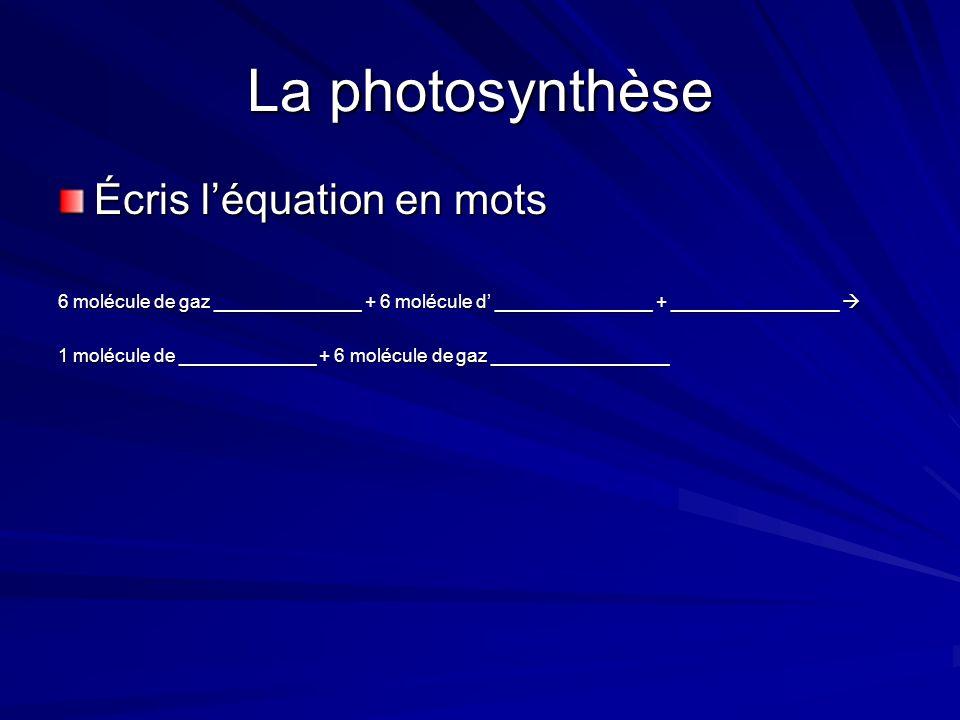 La photosynthèse La photosynthèse a lieu dans les chloroplastes des cellules végétales.