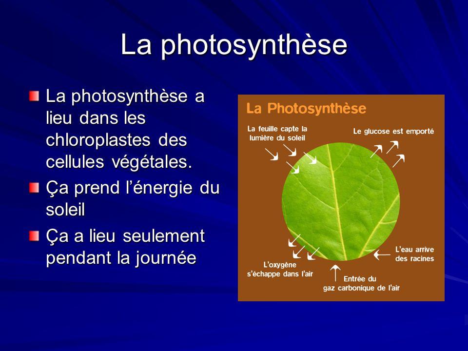 Les pyramides écologiques Il y a 3 sortes : La pyramide des nombres: Représente le nombre dorganisme dans chaque niveau tropique La pyramide de la biomass: Représente le biomass des organismes dans chaque niveau tropique La pyramide dénergie: Représente lénergie dans chaque niveau tropique