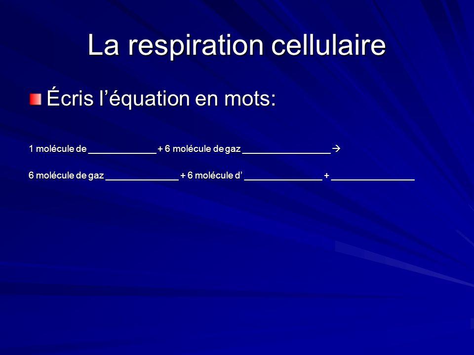 La respiration cellulaire La respiration cellulaire a lieu dans les mitochondries des cellules végétales et animales.