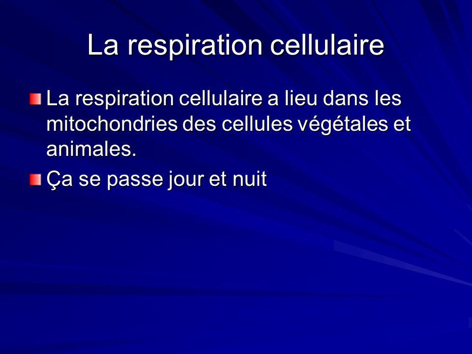 Les chaînes alimentaires Notes: Les flèches pointes toujours vers lorganisme qui mange lautre Niveau trophique est une façon de classifier les organismes, selon la façon quils obtiennent lénergie i.e.