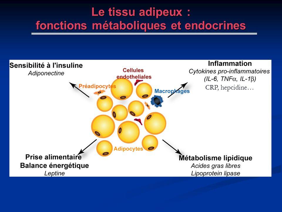 Le tissu adipeux : fonctions métaboliques et endocrines CRP, hepcidine…