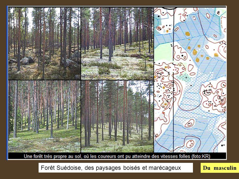 Forêt Suédoise, des paysages boisés et marécageux Du masculin