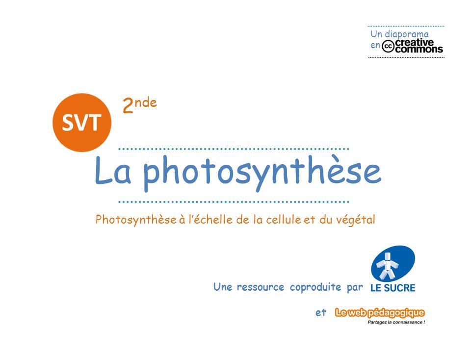 Un diaporama en Une ressource coproduite par et 2 nde La photosynthèse SVT Photosynthèse à léchelle de la cellule et du végétal