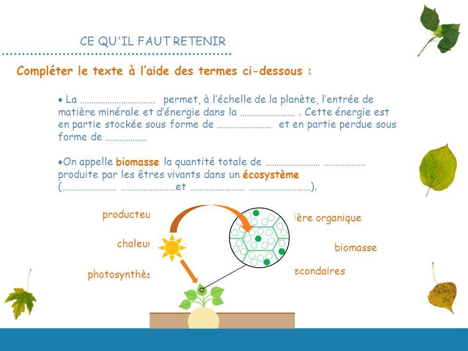 Un diaporama en Une ressource coproduite par et 2 nde La photosynthèse SVT ANNEXE