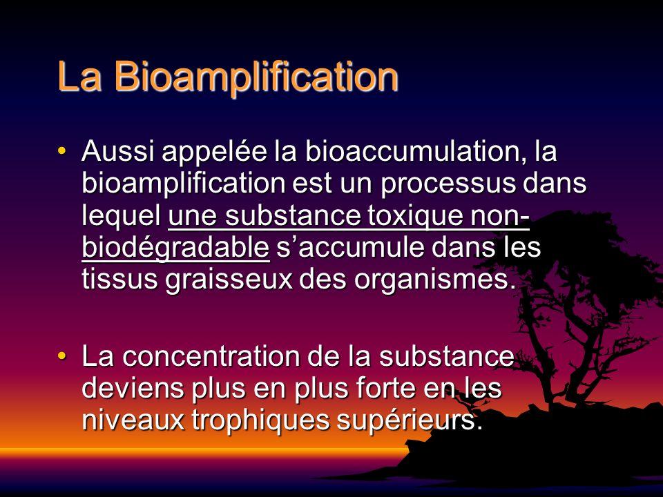 La Bioamplification Aussi appelée la bioaccumulation, la bioamplification est un processus dans lequel une substance toxique non- biodégradable saccum