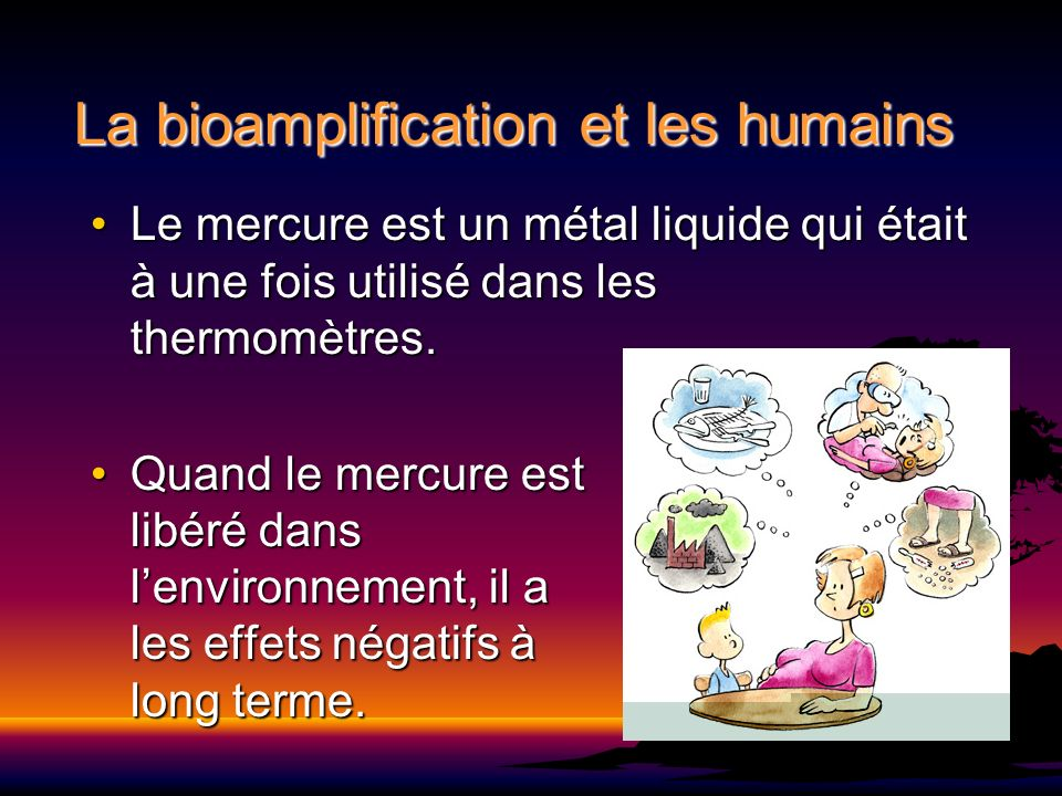 La bioamplification et les humains Le mercure est un métal liquide qui était à une fois utilisé dans les thermomètres.Le mercure est un métal liquide