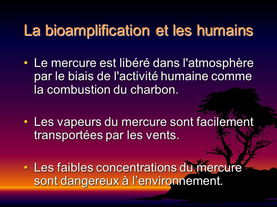 La bioamplification et les humains Le mercure est libéré dans l'atmosphère par le biais de l'activité humaine comme la combustion du charbon.Le mercur