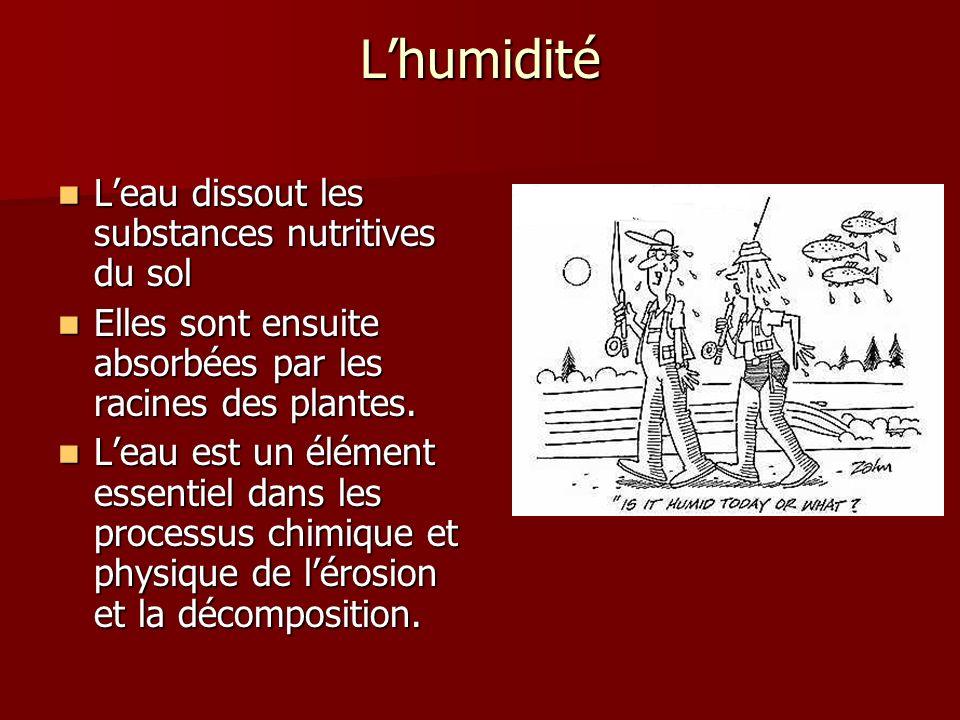 Lhumidité Leau dissout les substances nutritives du sol Leau dissout les substances nutritives du sol Elles sont ensuite absorbées par les racines des