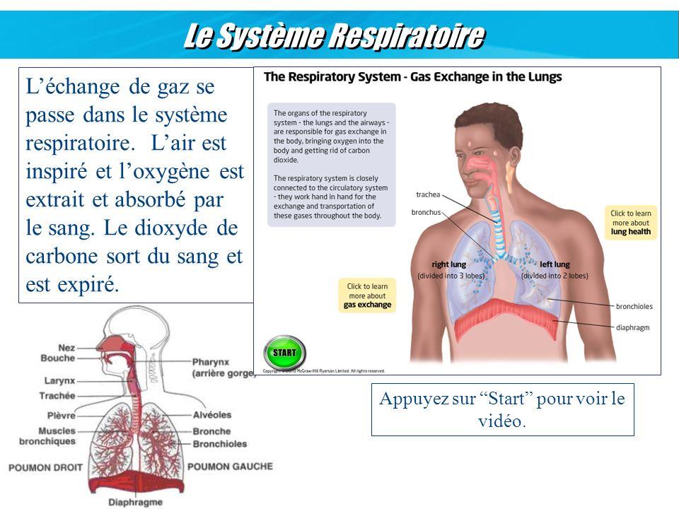 Le Système Respiratoire Léchange de gaz se passe dans le système respiratoire. Lair est inspiré et loxygène est extrait et absorbé par le sang. Le dio